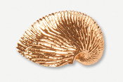 #549G - Nautilus Shell 24K Gold Plated Pin