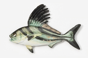 #231P - Roosterfish Hand Painted Pin