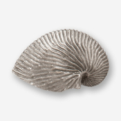 "#D54910 - Nautilus Shell 2.5"" (right) Pewter Drawer Pull"